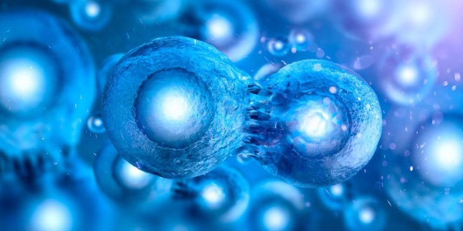 Four main types of stem cells