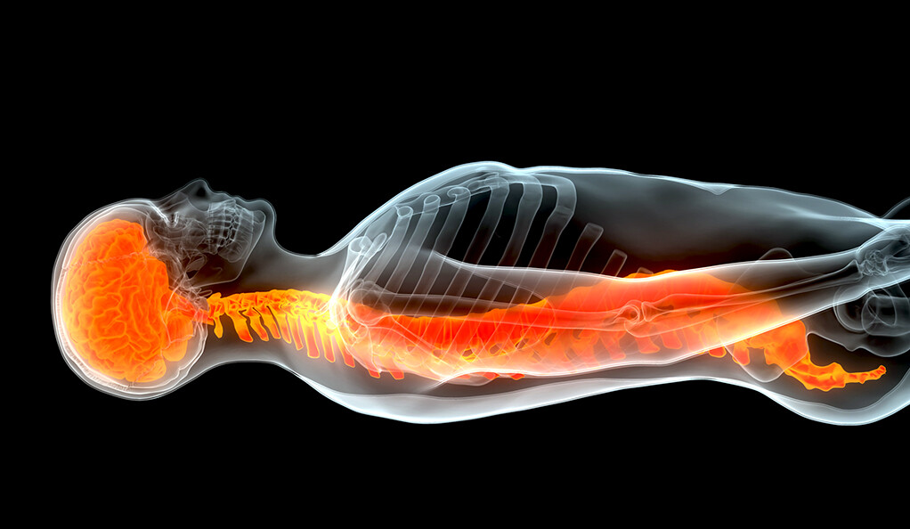 Yale scientists repair injured spinal cords using patients' own stem cells